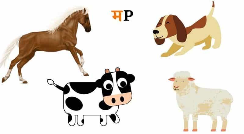 माझा आवडता प्राणी मराठी निबंध Best Essay on my favourite animal in Marathi